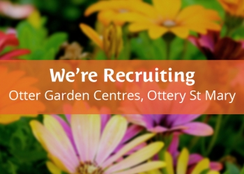 jobs in ottery st mary