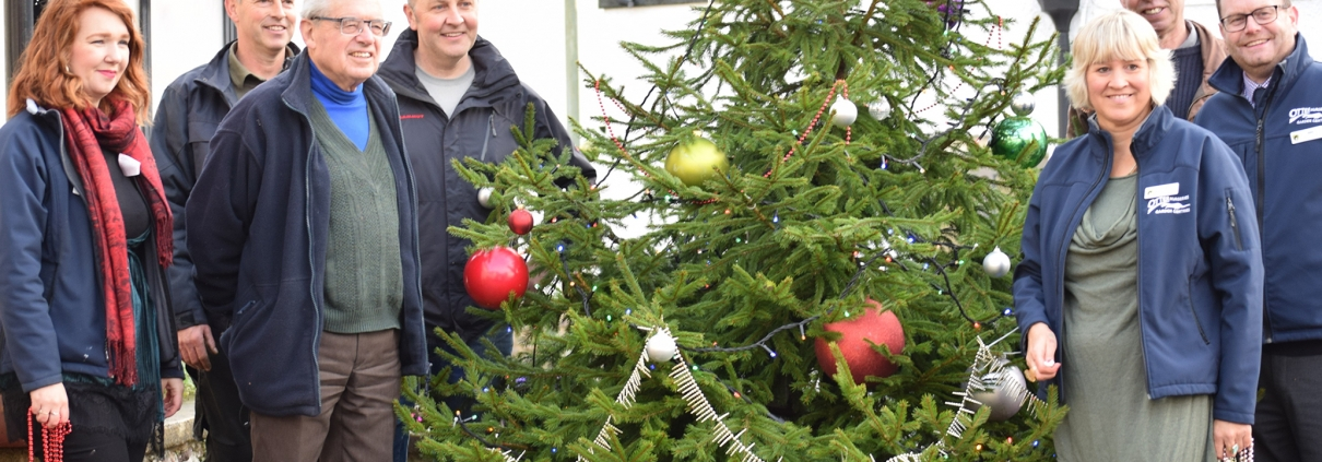 Locally grown tree for Ottery St Mary town centre