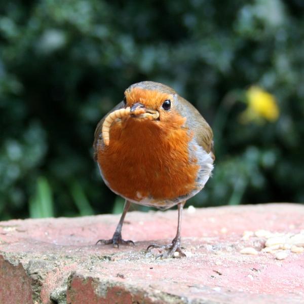 Wildlife & Bird Care