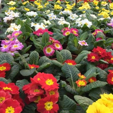 Early Season Plant Selection