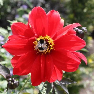 Summer Flowering Bulbs